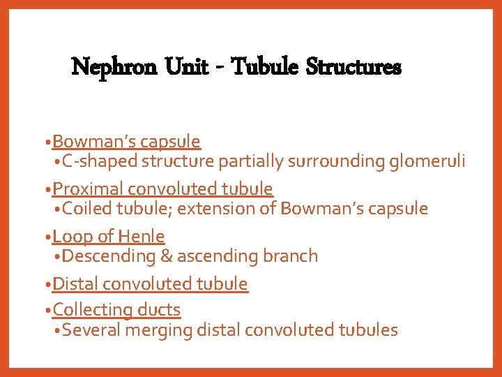 Nephron Unit - Tubule Structures • Bowman's capsule • C-shaped structure partially surrounding glomeruli