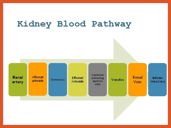 Kidney Blood Pathway Renal artery Afferent arteriole Glomerulus Efferent Arteriole Capillaries contacting nephron units