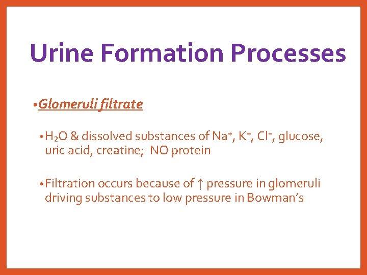 Urine Formation Processes • Glomeruli filtrate • H₂O & dissolved substances of Na⁺, K⁺,