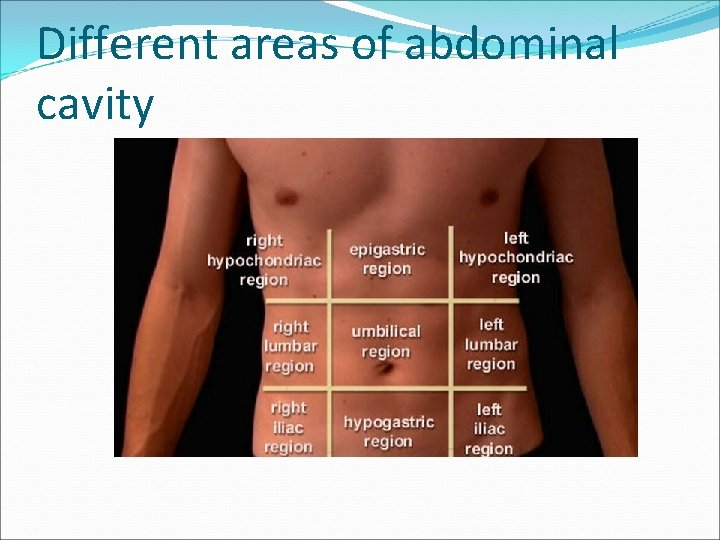 Different areas of abdominal cavity
