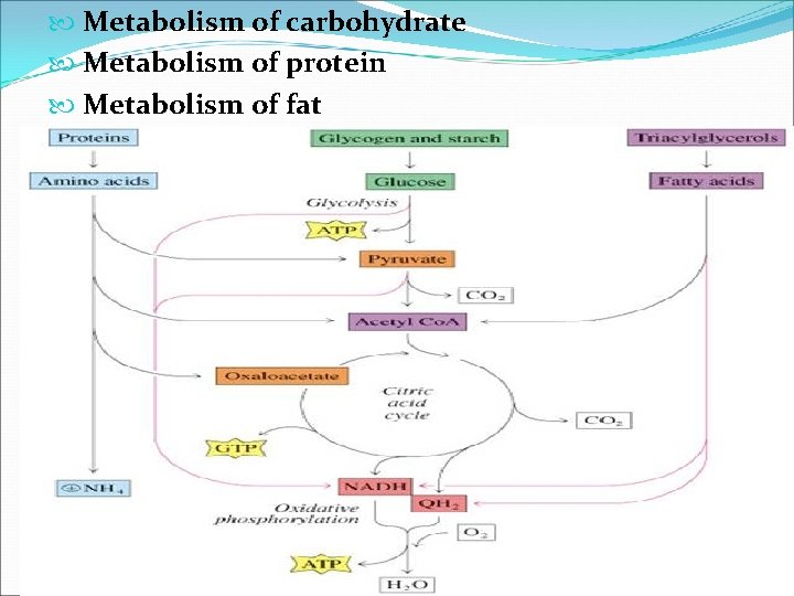 Metabolism of carbohydrate Metabolism of protein Metabolism of fat