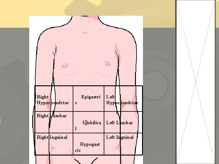 Right Hypochondriac Epigastri c Left Hypochondriac Right Lumbar Umbilica Left Lumbar l Right Inguinal