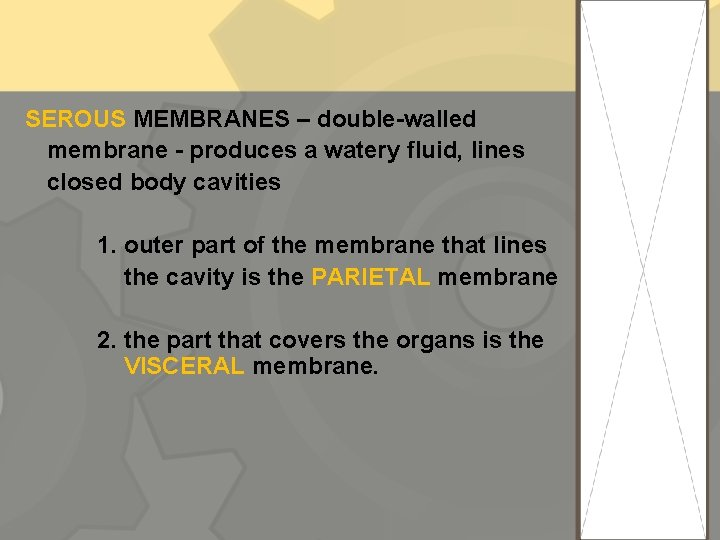 SEROUS MEMBRANES – double-walled membrane - produces a watery fluid, lines closed body cavities