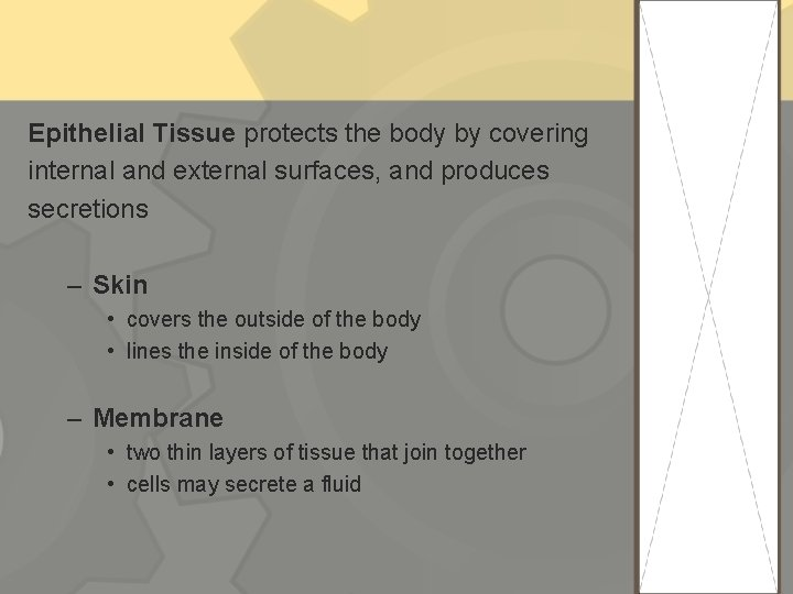 Epithelial Tissue protects the body by covering internal and external surfaces, and produces secretions