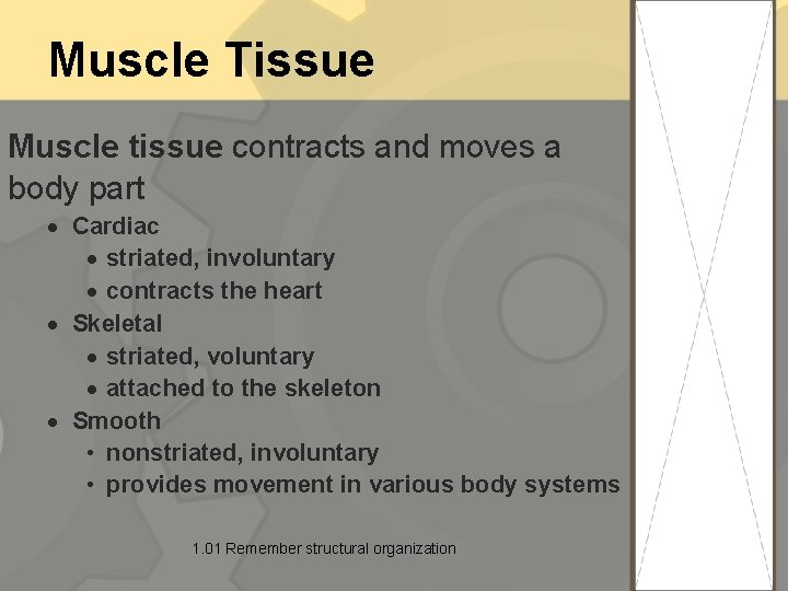 Muscle Tissue Muscle tissue contracts and moves a body part Cardiac striated, involuntary contracts