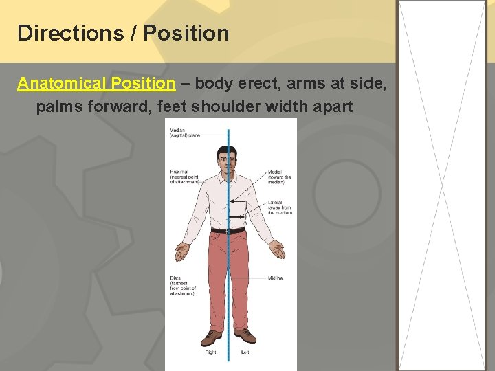 Directions / Position Anatomical Position – body erect, arms at side, palms forward, feet