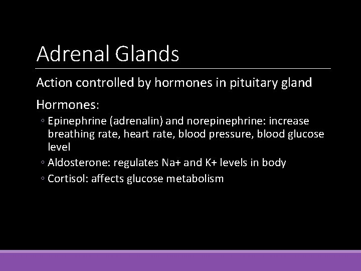 Adrenal Glands Action controlled by hormones in pituitary gland Hormones: ◦ Epinephrine (adrenalin) and