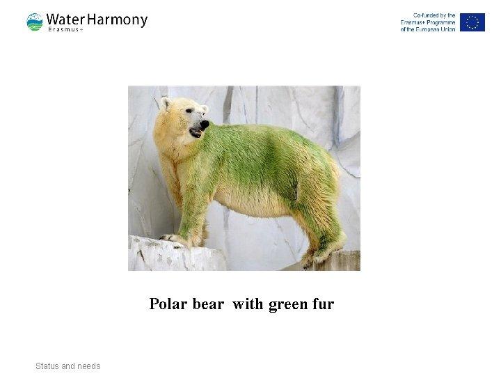 Polar bear with green fur Status and needs