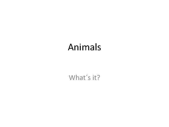 Animals What´s it?