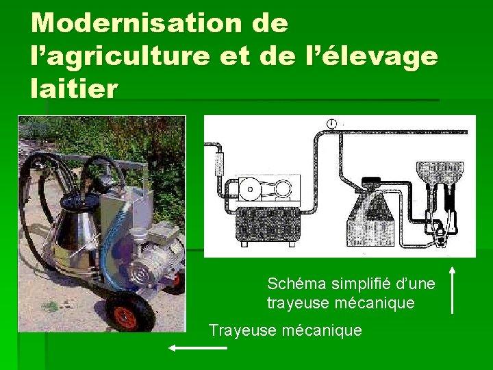 Modernisation de l'agriculture et de l'élevage laitier Schéma simplifié d'une trayeuse mécanique Trayeuse mécanique