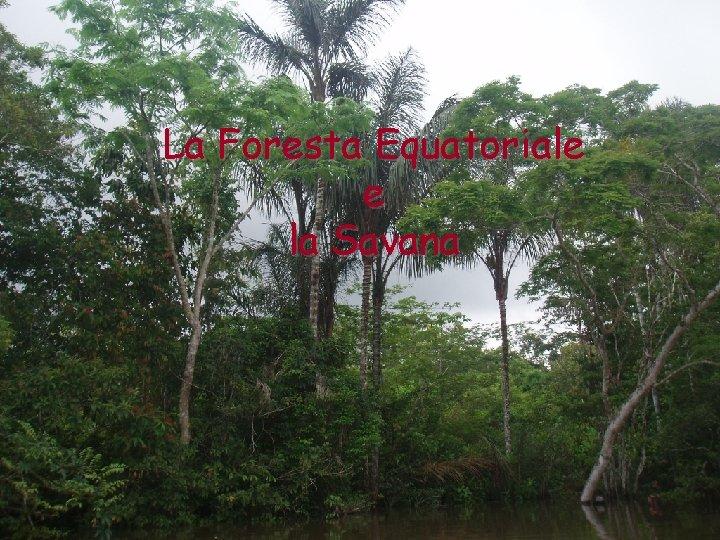 La Foresta Equatoriale e la Savana