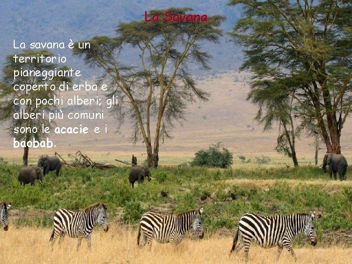 La Savana La savana è un territorio pianeggiante coperto di erba e con pochi