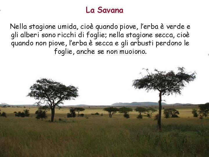 La Savana Nella stagione umida, cioè quando piove, l'erba è verde e gli alberi