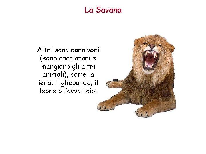 La Savana Altri sono carnivori (sono cacciatori e mangiano gli altri animali), come la