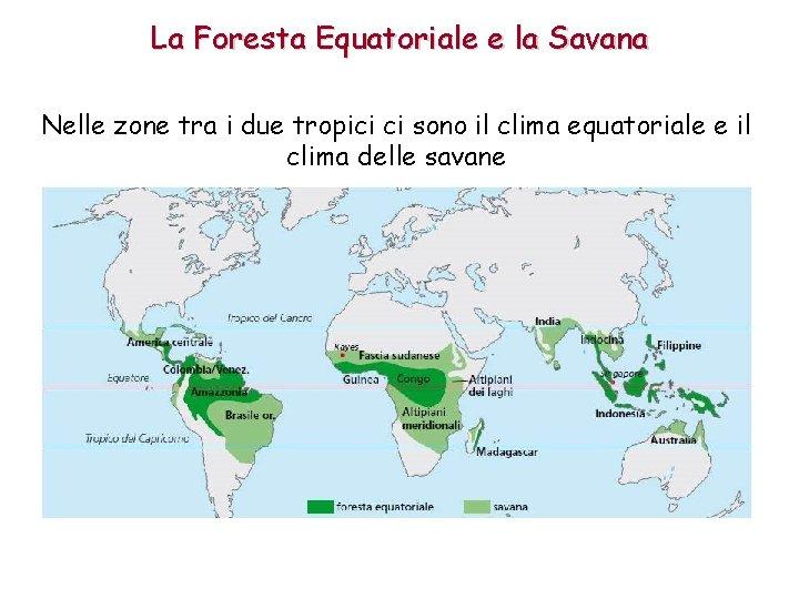 La Foresta Equatoriale e la Savana Nelle zone tra i due tropici ci sono