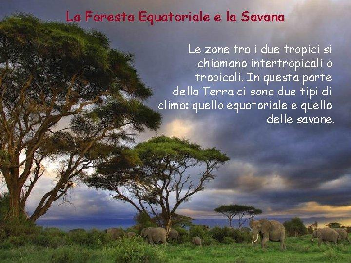 La Foresta Equatoriale e la Savana Le zone tra i due tropici si chiamano