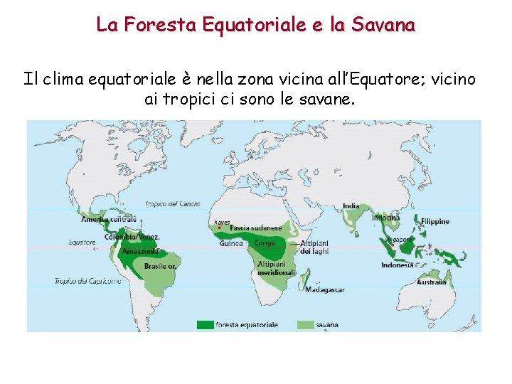 La Foresta Equatoriale e la Savana Il clima equatoriale è nella zona vicina all'Equatore;