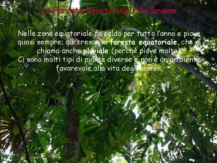La Foresta Equatoriale e la Savana Nella zona equatoriale fa caldo per tutto l'anno