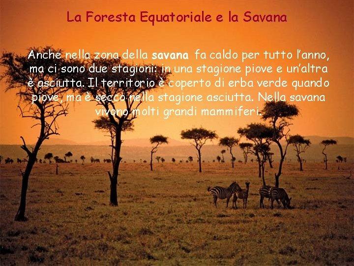 La Foresta Equatoriale e la Savana Anche nella zona della savana fa caldo per