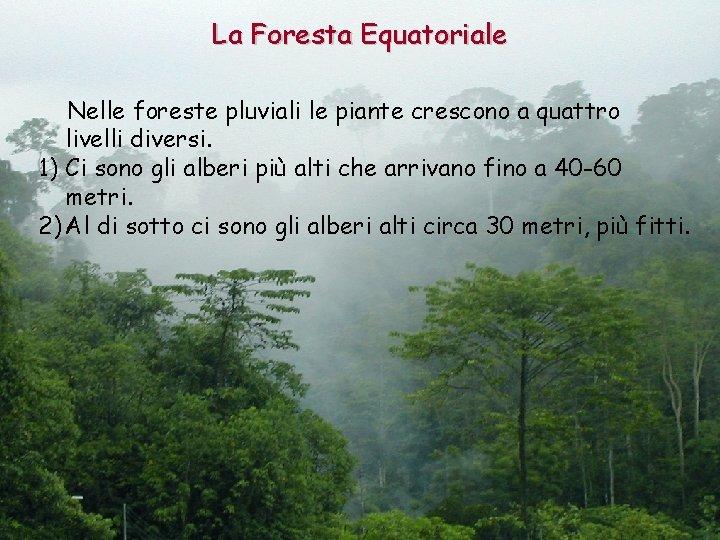 La Foresta Equatoriale Nelle foreste pluviali le piante crescono a quattro livelli diversi. 1)