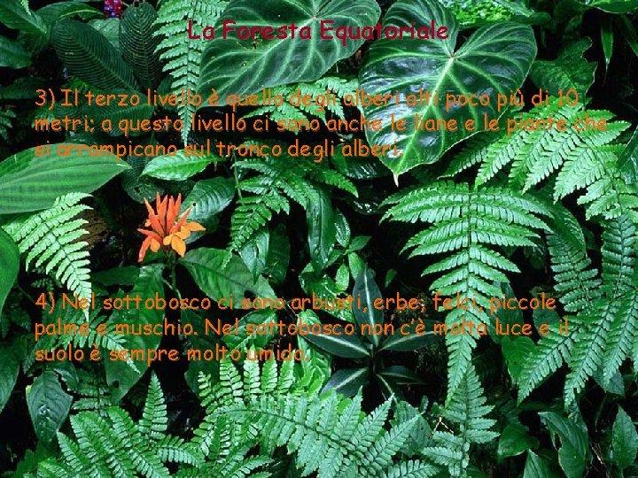 La Foresta Equatoriale 3) Il terzo livello è quello degli alberi alti poco più