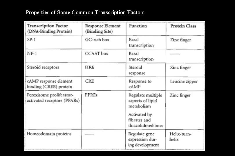 Properties of Some Common Transcription Factors