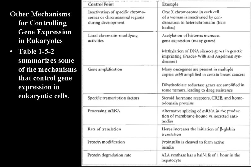Other Mechanisms for Controlling Gene Expression in Eukaryotes • Table 1 -5 -2 summarizes
