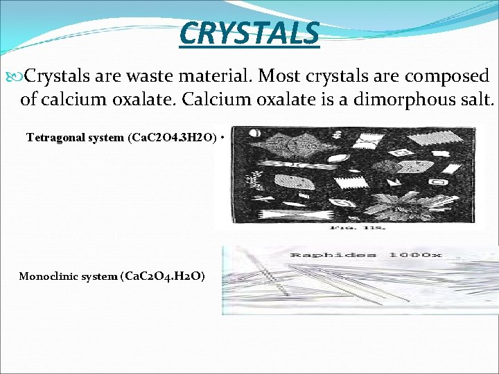 CRYSTALS Crystals are waste material. Most crystals are composed of calcium oxalate. Calcium oxalate
