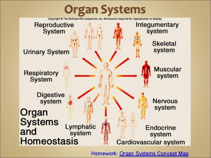 Homework: Organ Systems Concept Map