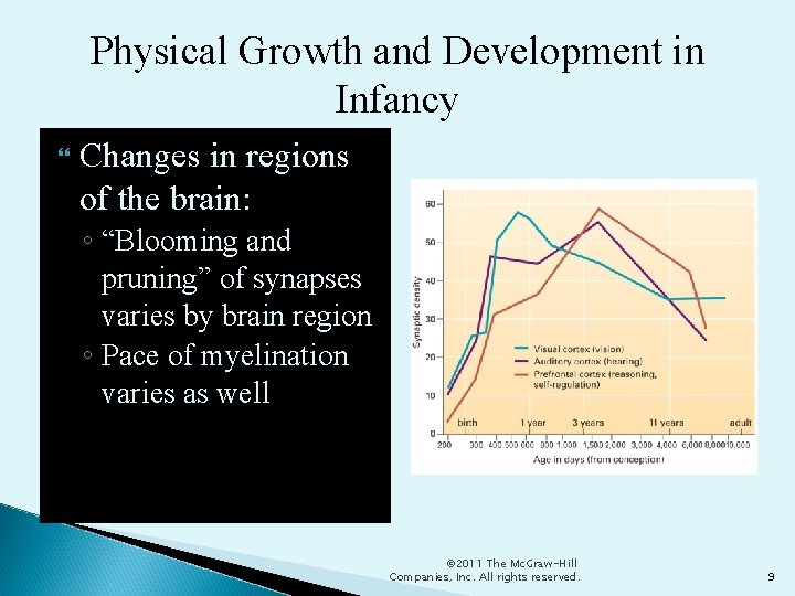 """Physical Growth and Development in Infancy Changes in regions of the brain: ◦ """"Blooming"""