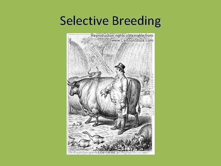 Selective Breeding