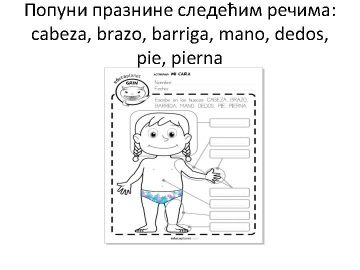 Попуни празнине следећим речима: cabeza, brazo, barriga, mano, dedos, pierna