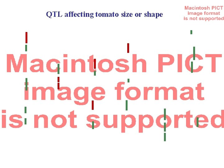 QTL affecting tomato size or shape