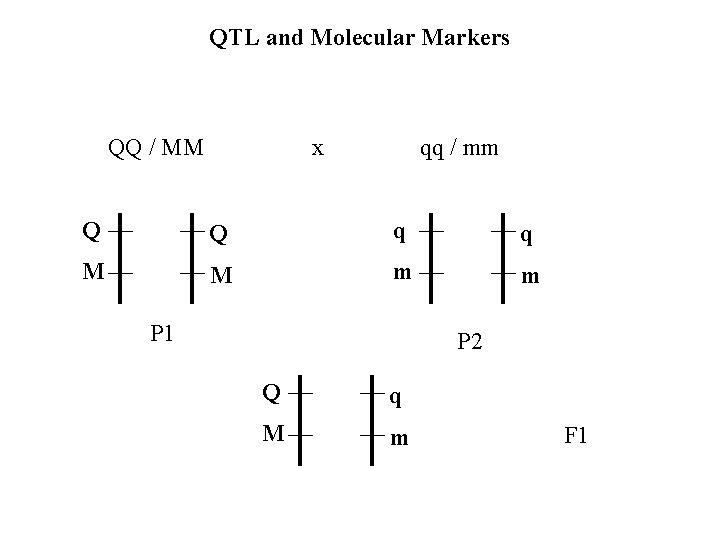 QTL and Molecular Markers QQ / MM x qq / mm Q Q q
