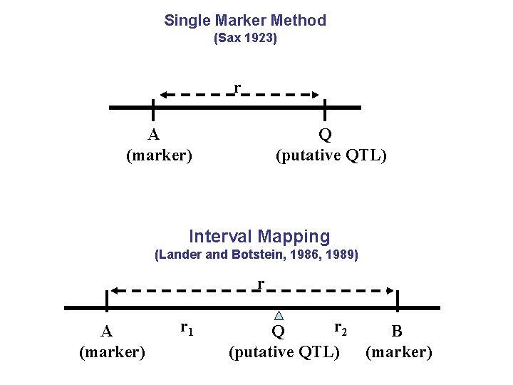 Single Marker Method (Sax 1923) r A (marker) Q (putative QTL) Interval Mapping (Lander