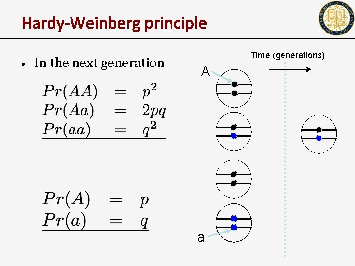 Hardy-Weinberg principle • In the next generation Time (generations) A a