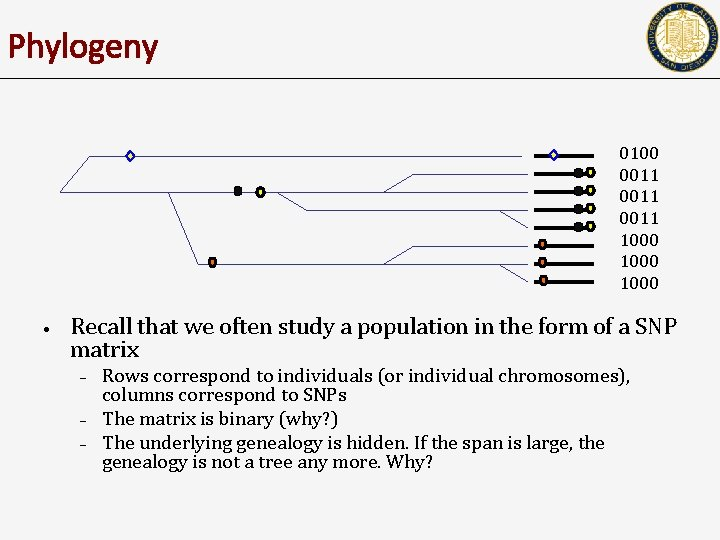 Phylogeny 0100 0011 1000 • Recall that we often study a population in the