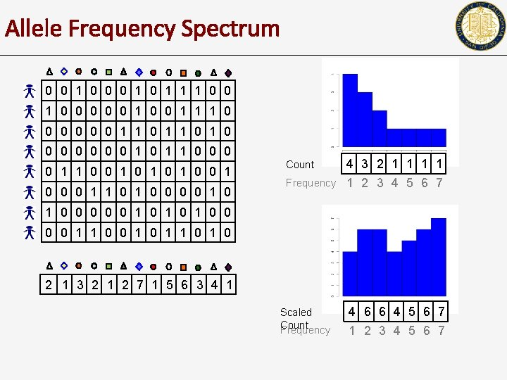 Allele Frequency Spectrum 0 0 1 0 1 1 1 0 0 0 0