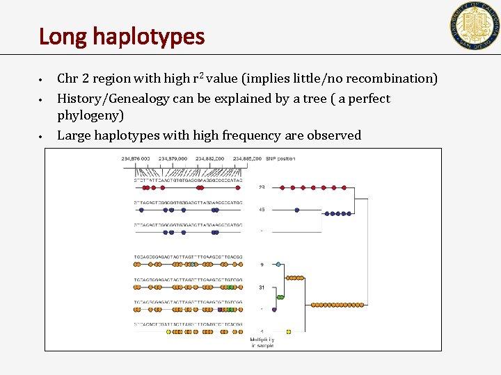 Long haplotypes • • • Chr 2 region with high r 2 value (implies