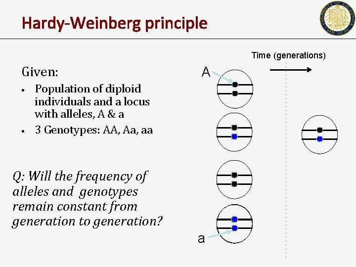 Hardy-Weinberg principle Time (generations) Given: • • A Population of diploid individuals and a