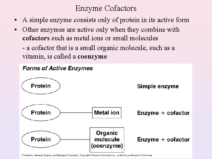 Enzyme Cofactors • A simple enzyme consists only of protein in its active form