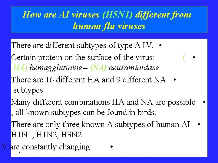 How are AI viruses (H 5 N 1) different from human flu viruses There