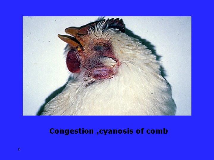 Congestion , cyanosis of comb 9