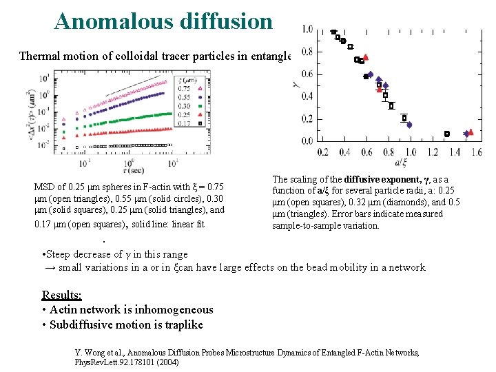 Anomalous diffusion Thermal motion of colloidal tracer particles in entangled F-actin MSD of 0.