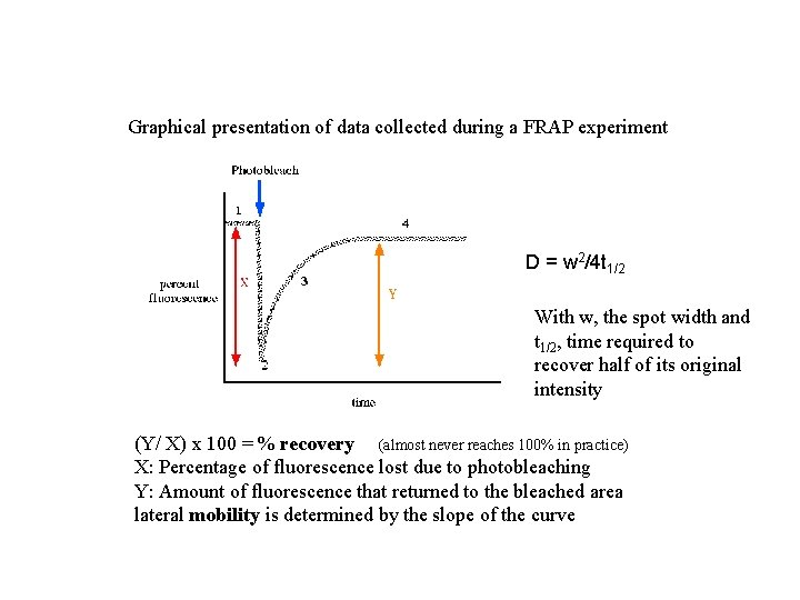 Graphical presentation of data collected during a FRAP experiment D = w 2/4 t