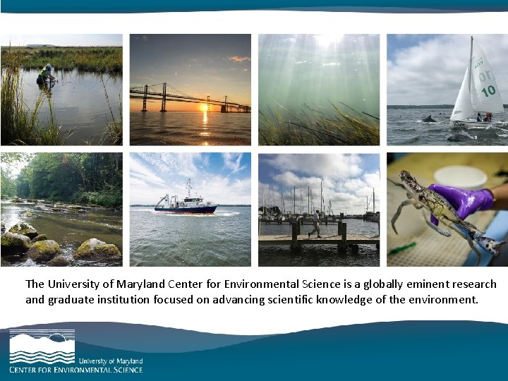 category goes here and here The University of Maryland Center for Environmental Science is
