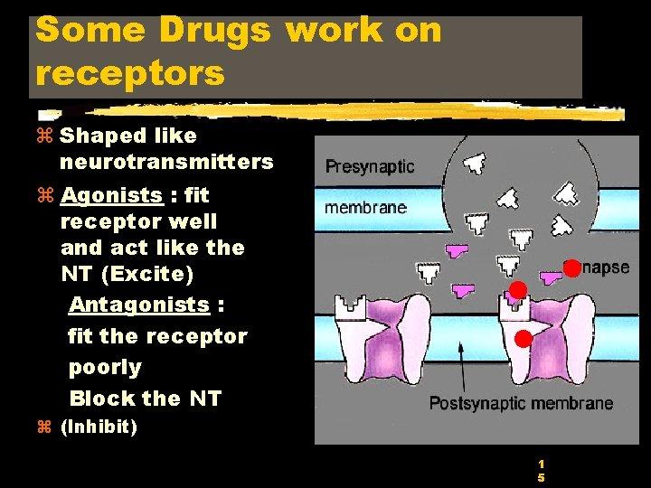 Some Drugs work on receptors z Shaped like neurotransmitters z Agonists : fit receptor