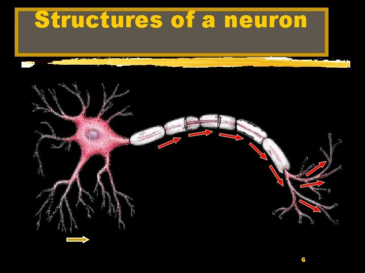Structures of a neuron 6