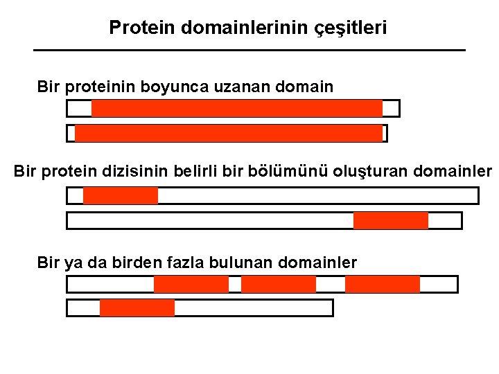 Protein domainlerinin çeşitleri Bir proteinin boyunca uzanan domain Bir protein dizisinin belirli bir bölümünü