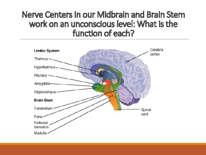 Nerve Centers in our Midbrain and Brain Stem work on an unconscious level: What